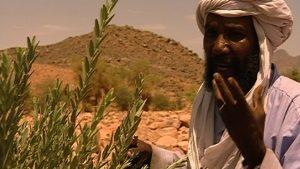 Wüstendok-Heilpflanze