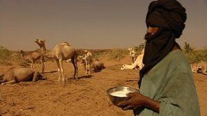 wüstendok - kamelhirte