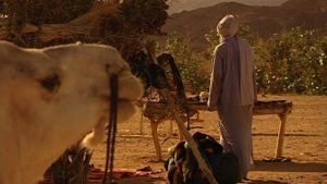 wüstendok - kamel+ousmane